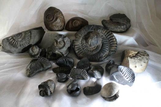 mansalay fossils